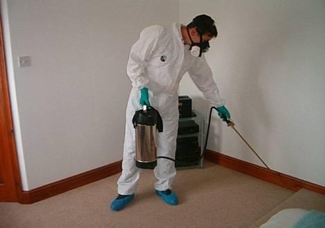 Тараканы:как избавиться от непрошеных гостей
