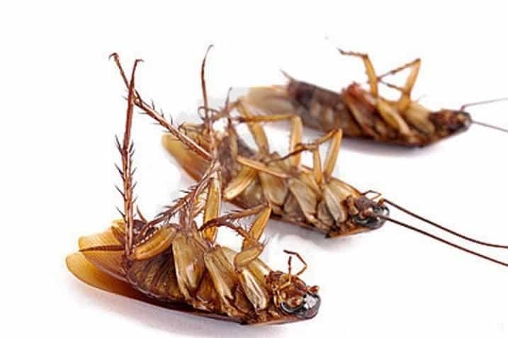Дохлокс: инсектицидный гель для борьбы с тараканами