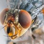Мухи, минирующие листья. эффективные методы борьбы против белокрылки, тли и минирующих мух