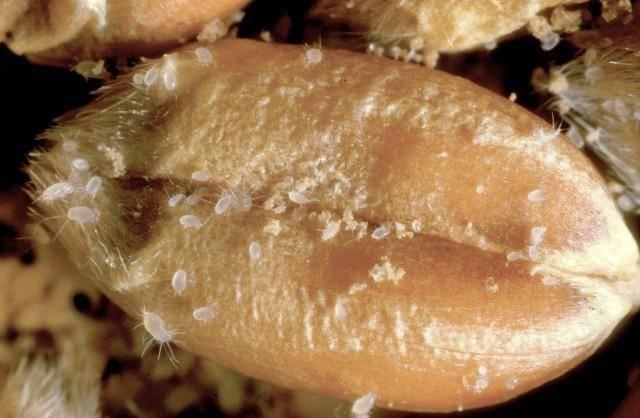 Какие есть виды клещей и как с ними бороться?