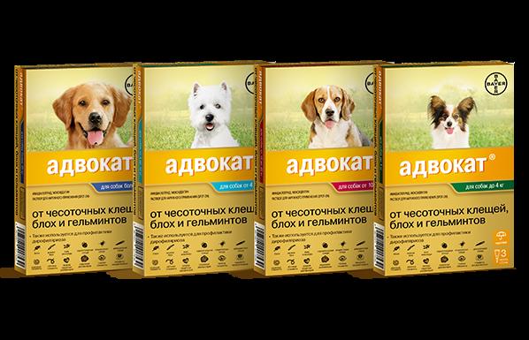 Капли от блох адвокат инструкция. ветеринарный препарат «адвокат» для собак: дозировка, инструкция. показания к применению