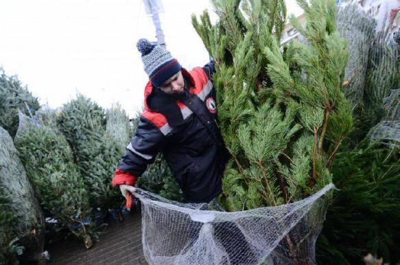 Паникующий читатель: правда ли, что елки кишат клещами и их нельзя ставить дома?
