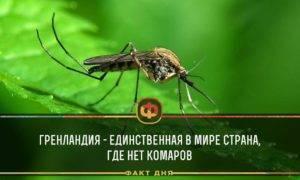 Дмитрий комаров: сколько зарабатывает путешественник, мечтатель, телеведущий