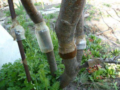 Ловушка для муравьев своими руками для дома и сада