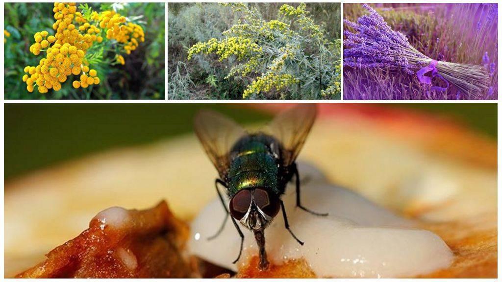 Как избавиться от муравьев, ос, комаров, мух и других насекомых на даче?