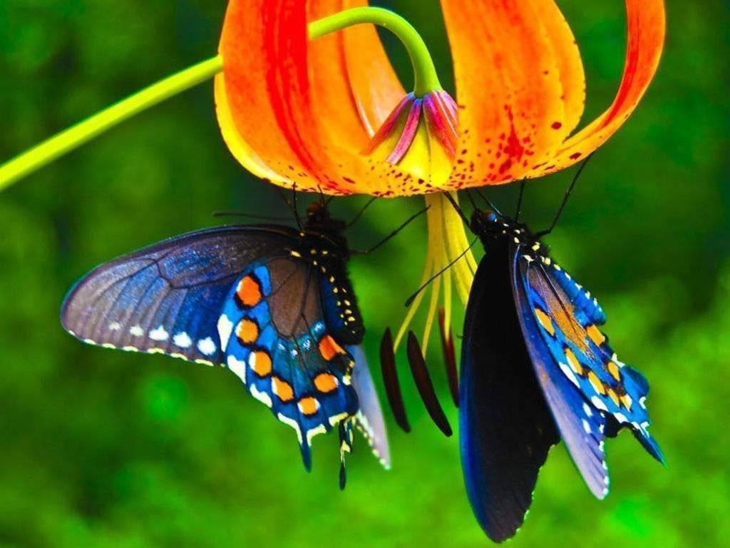 10 самых красивых бабочек в мире