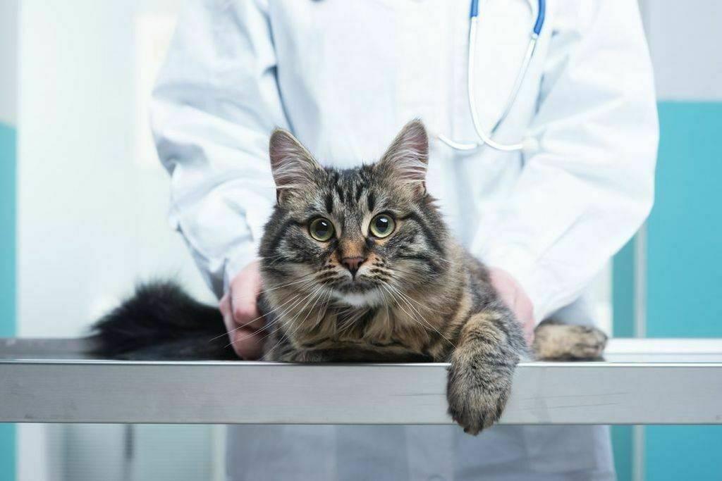 Власоеды у кошек — неприметные, но очень опасные враги