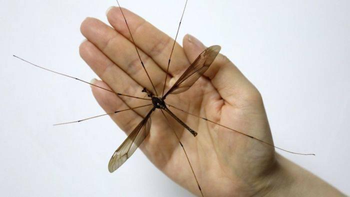 Как убрать мошку из уха. как вытащить комара из уха