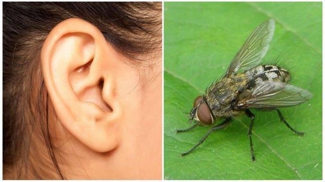 Вытаскивать муху из уха