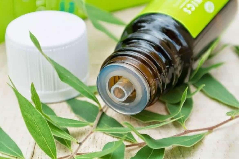 Масло чайного дерева от вшей и гнид: как применять, отзывы и эффективность