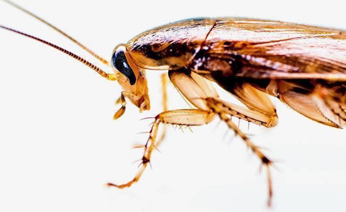 Преодоление боязни тараканов