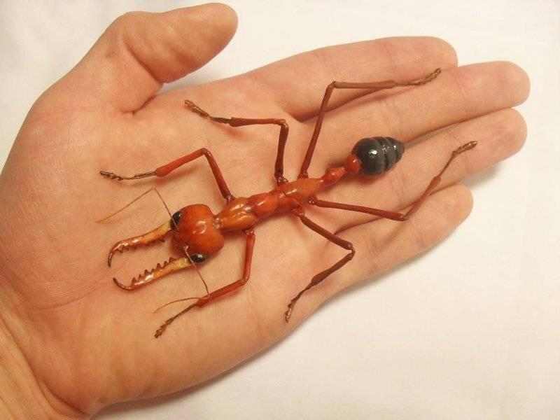 Самый большой муравейник в мире. самый большой муравей. народные способы борьбы.