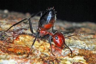 Чем питаются муравьи в зависимости от места обитания и породы