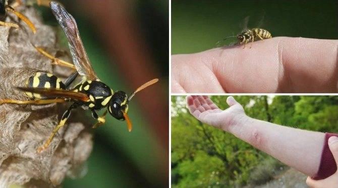 Откуда в доме осенью берутся мухи и как от них спастись