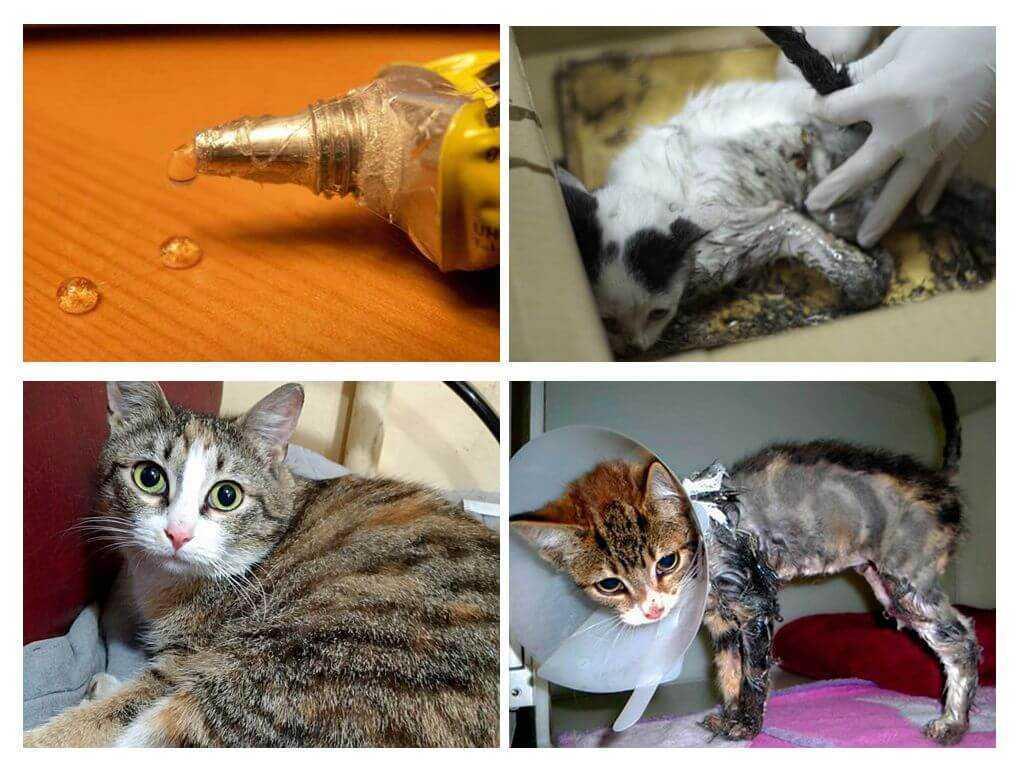 Топ 5 средств, чем быстро отмыть клей для мышей и крыс в домашних условиях