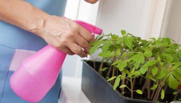 Как правильно применять нашатырный спирт для садовых роз