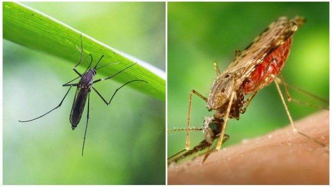 Как видят комары и что их привлекает к человеку. ученые выяснили, как комары находят и выбирают свою жертву как видит комар