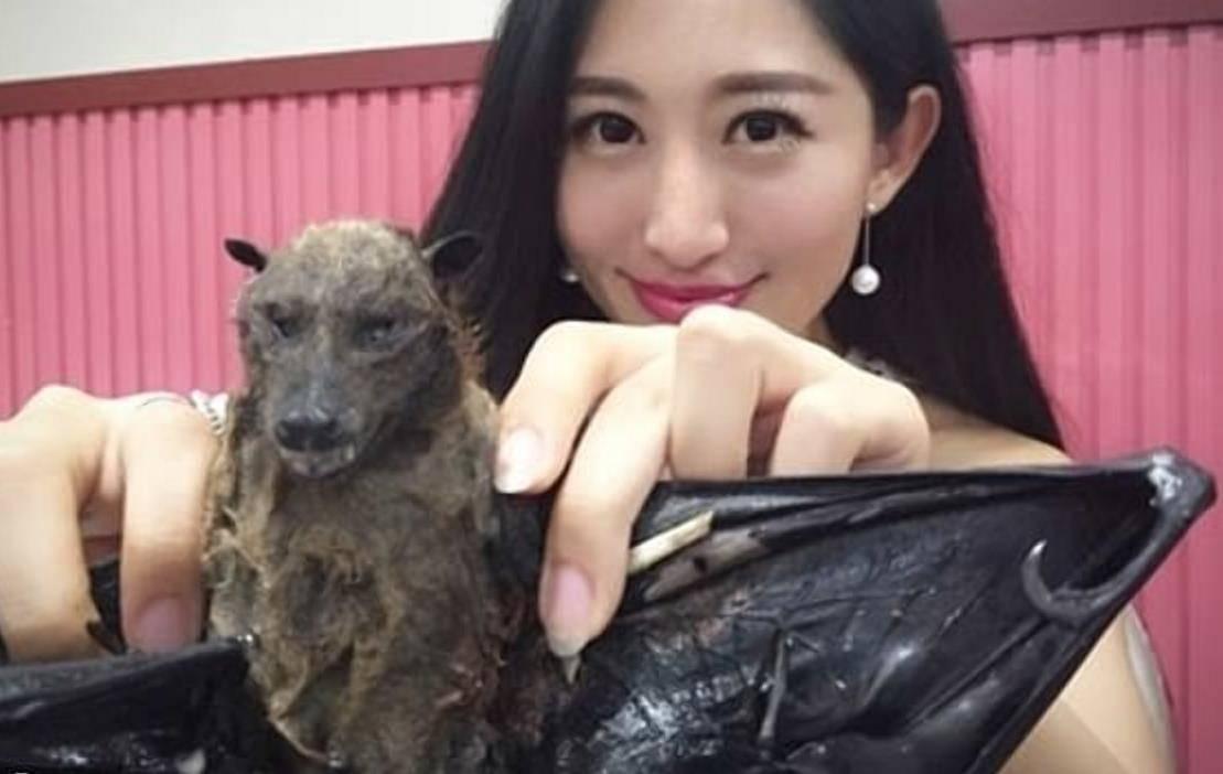 Чем питаются мыши в диких условиях и вблизи человеческого жилья?