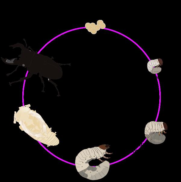 Отряд двукрылые представители