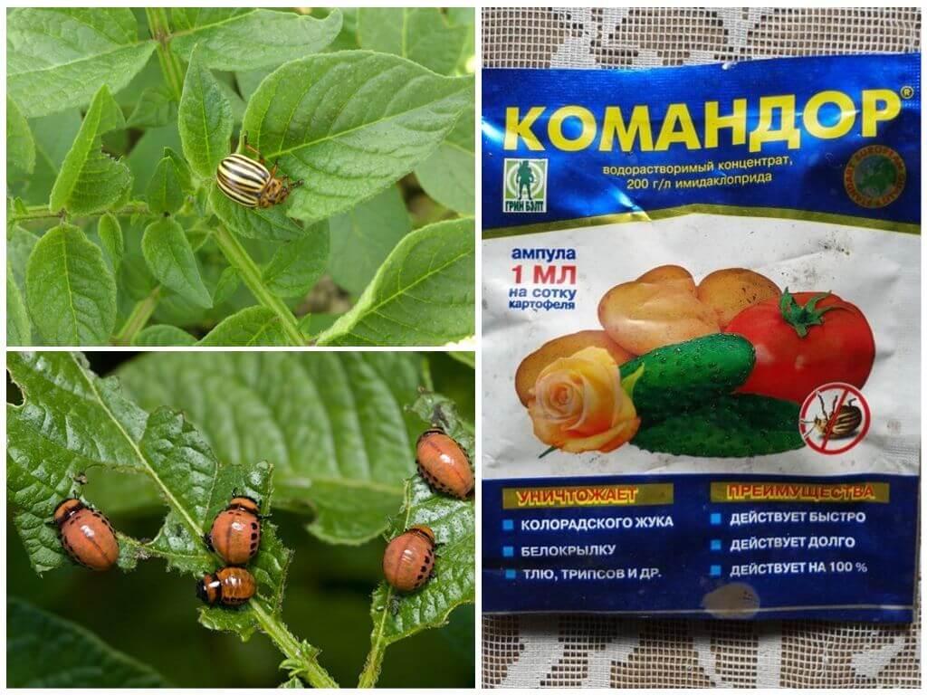 Апачи средство от колорадского жука: как разводить, применение