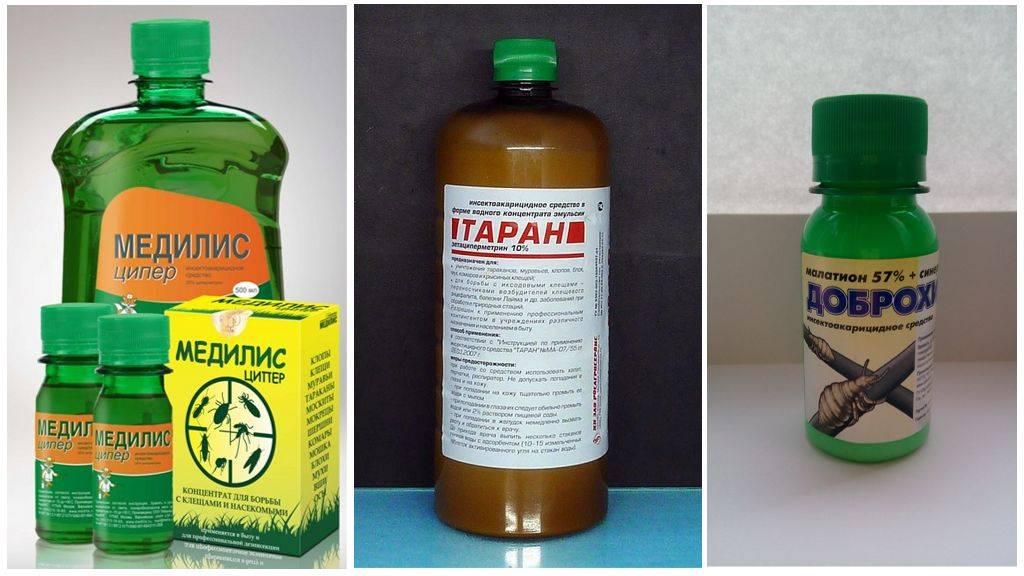 Цифокс - препарат для борьбы с клещами, инструкция по применению от различных паразитов