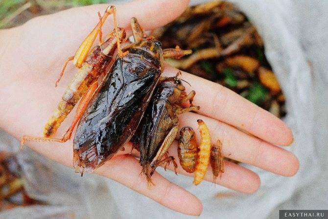 Ящерицы. что едят в домашних условиях и естественной среде?