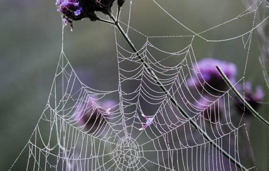 Сонник паутина. к чему снится паутина во сне?