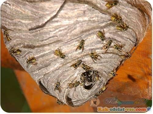 Как сделать ловушку для пчел своими руками с помощью чертежей