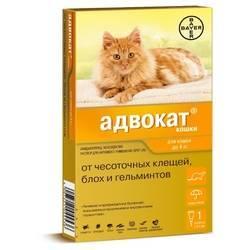 Препарат чистотел: капли от блох для кошек и котят
