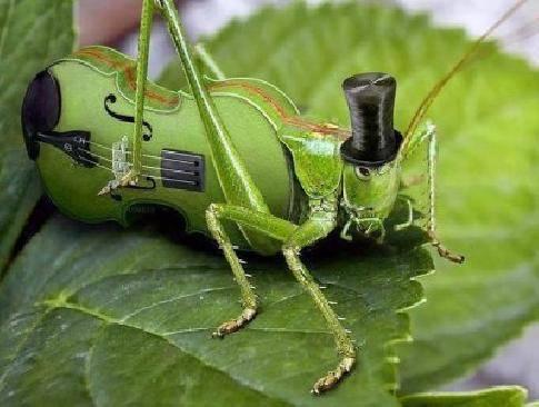 Сверчки ночью издают звуки. мелодичный звук сверчка, или музыкальные способности насекомого