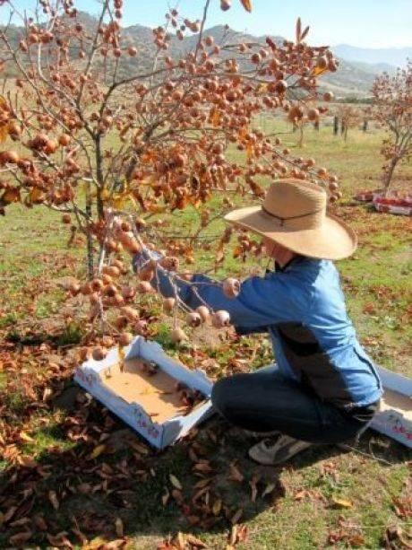 Как отвадить грызунов от яблонь