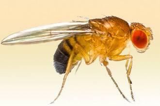 Укус муравья