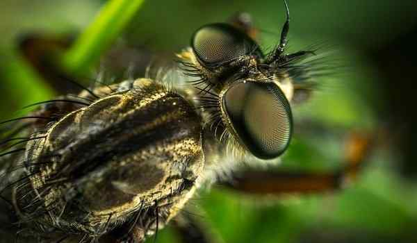 Укус осы пчелы