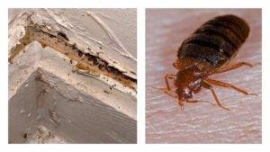 Клопы у соседей, что делать, чтобы избавиться от насекомых
