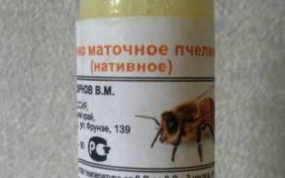 Апитерапия — лечение укусами пчел