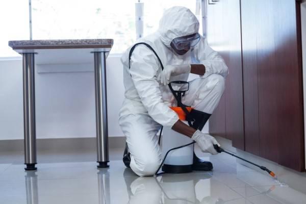Принцип дезинфекции от блох в квартире: методика, разновидности, цена