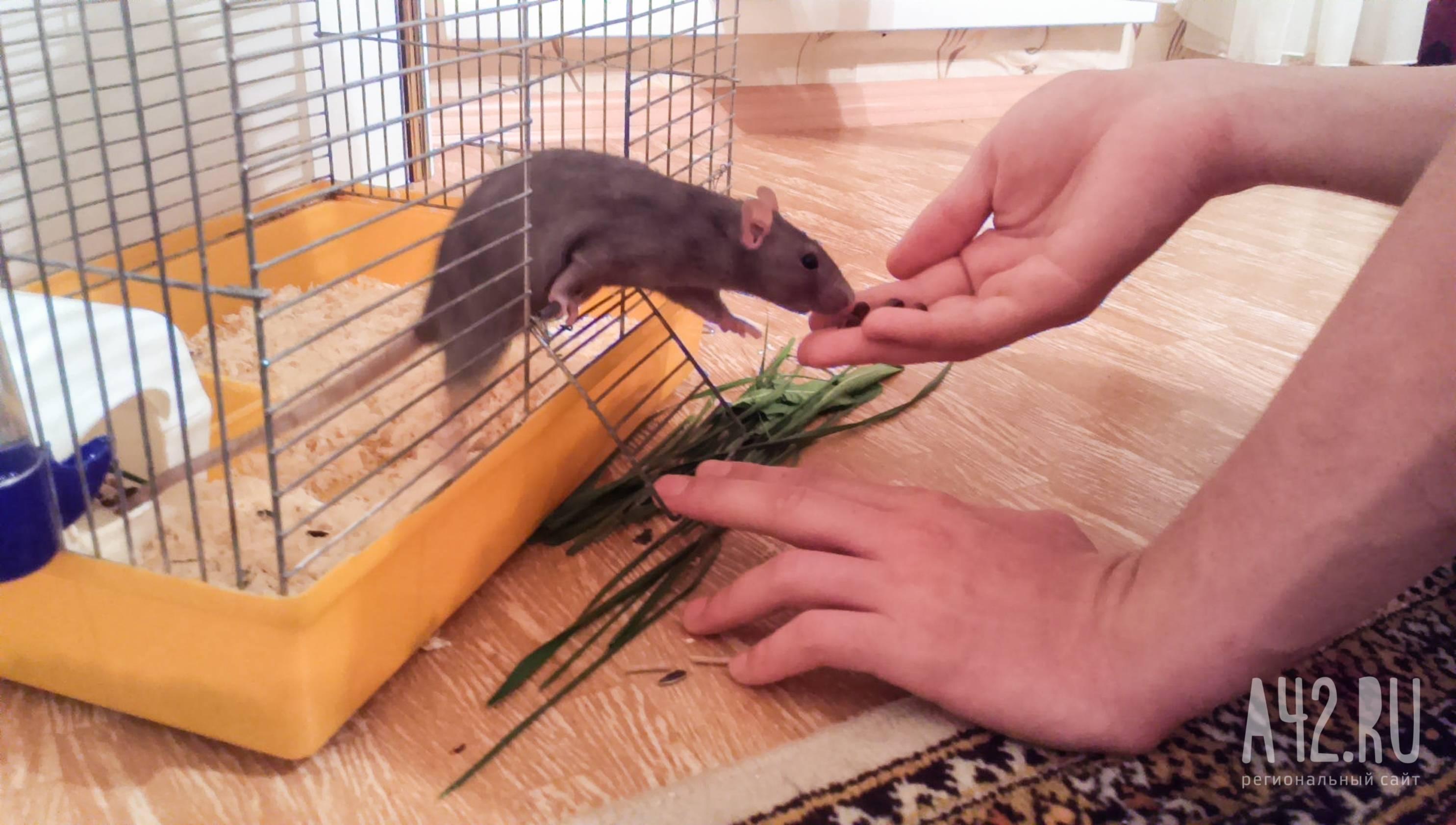Какой запах отпугивает мышей в квартире и доме
