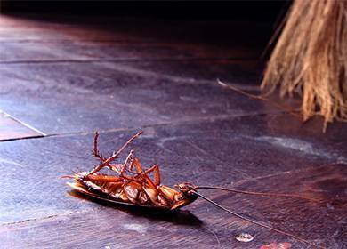 Как использовать борную кислоту в борьбе с тараканами