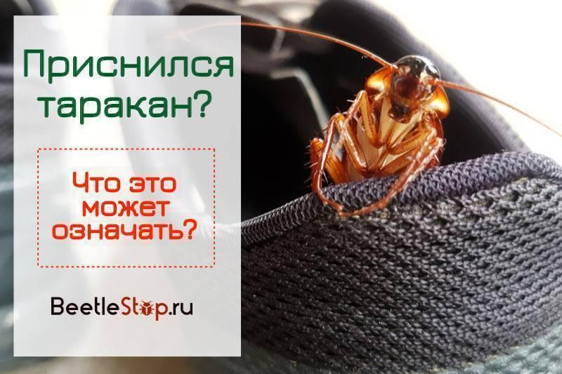 К чему снятся тараканы и что говорит сонник о том что их приснилось много, толкование чёрного или рыжего цвета насекомого, что будет если убить во сне