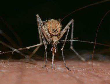 Народные средства от комаров и мошек на природе
