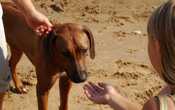 Какие средства помогут вывести блох у собаки