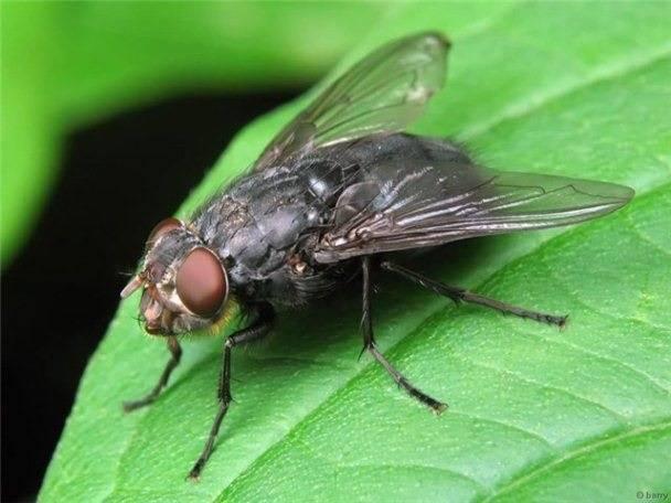 Народные средства для избавления от мух: проверенные рецепты