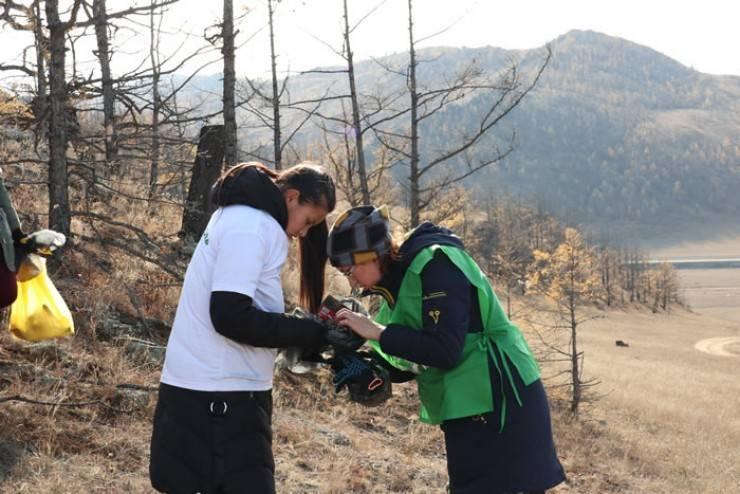 Центр защиты леса рассказывает об опасности нашествия шелкопряда в алтайском крае