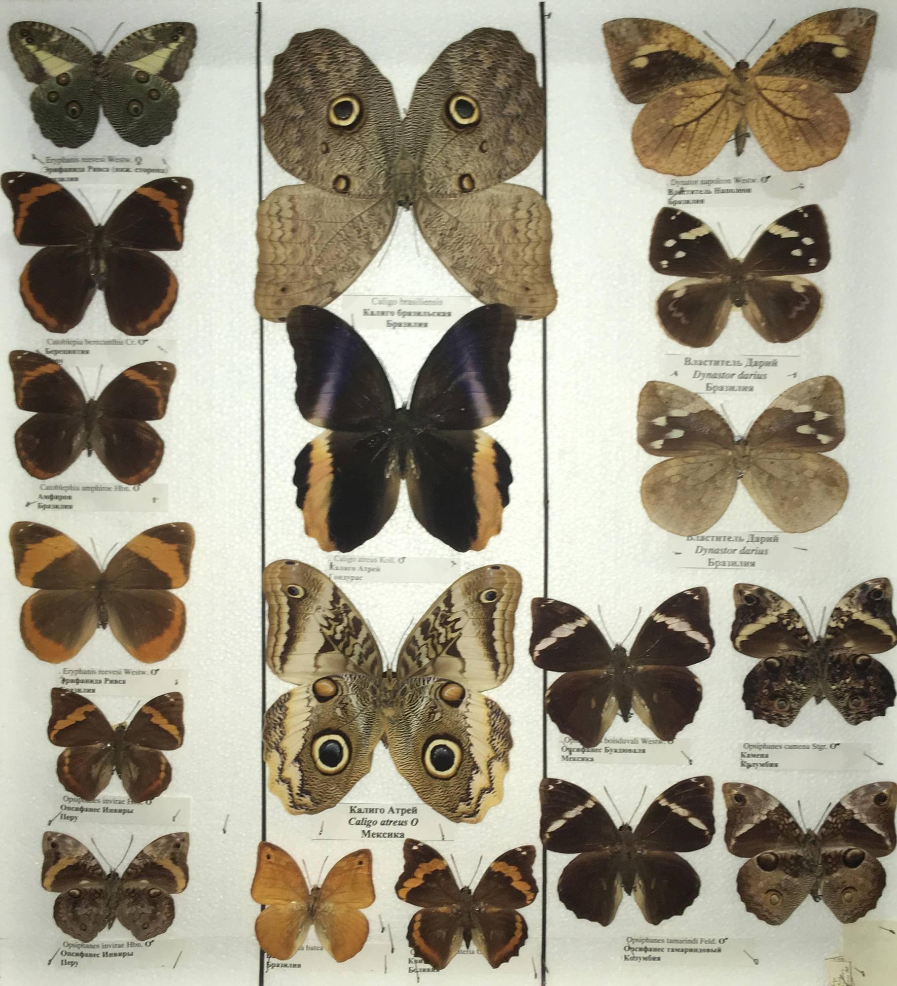 Бабочка – символ и тотем