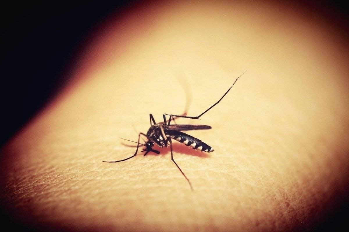 Как выглядит и развивается личинка комара?