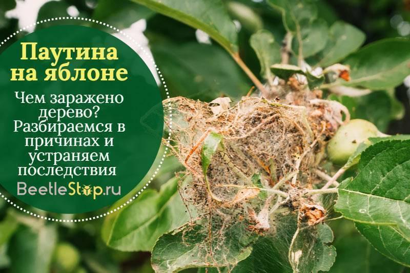 Яблонная моль – 4 совета по проведению работ и 8 средств