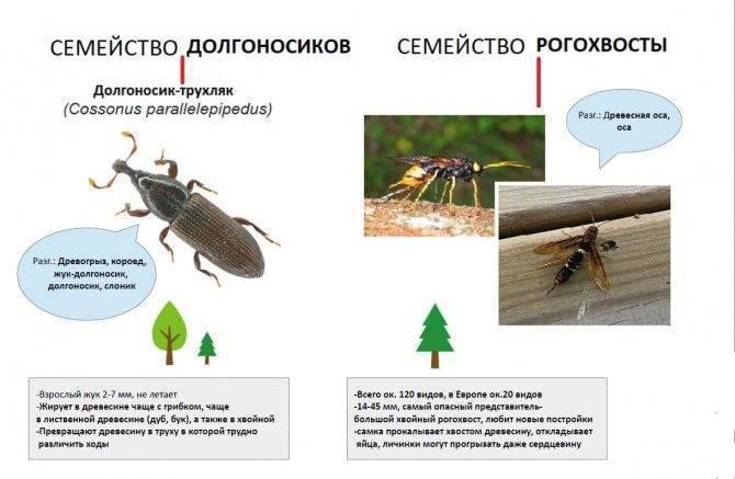 Чем опасен жук-долгоносик и как от него избавиться