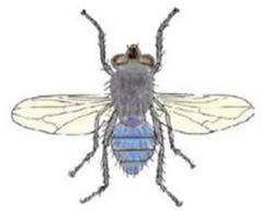 Причины, по которым мухи садятся на людей