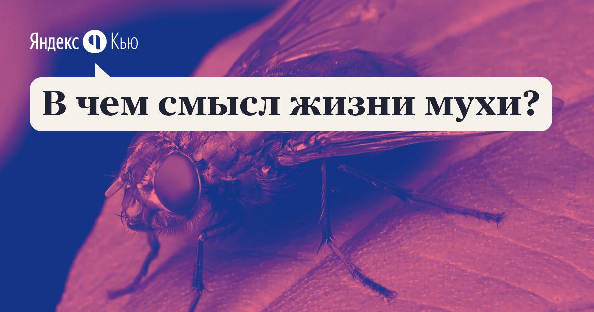 Почему человеку так трудно убить муху, а мухе-убийце - запросто