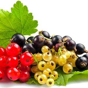 Меры борьбы с паутинным клещом на малине, смородине, клубнике, винограде и даже лимоне